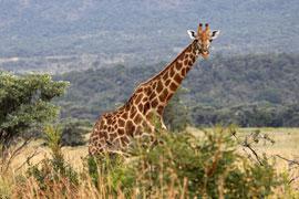 Hans Merensky Nature Reserve, Limpopo