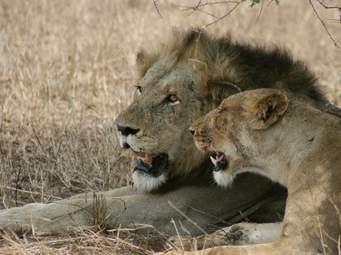 Mohlabetsi Conservancy, Limpopo